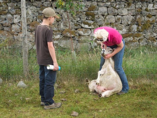 Ewe-style chiropody