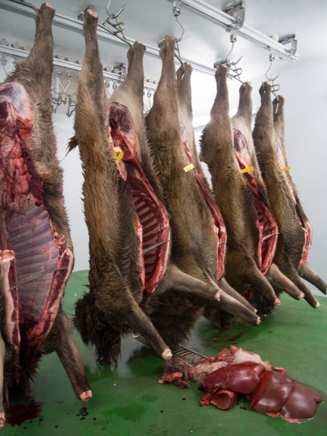 Carcases in the deer larder
